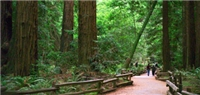 Muir Woods National Monument RV Vacation