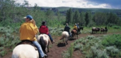 Horseback Riding Vacations - RV Vacation Idea