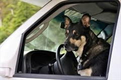 RV Vacation Travel with Pets